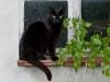 Onze kattenprins Henkie!